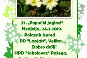 37. Papučki jaglaci, 24.03.2019